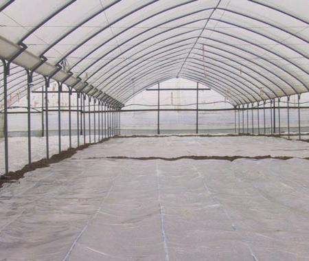 - Solarization- different plastic films-in-greenhouse